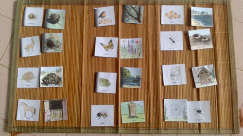 Nomenclatures : Les Animaux et Leurs Habitats - Cahier Montessori