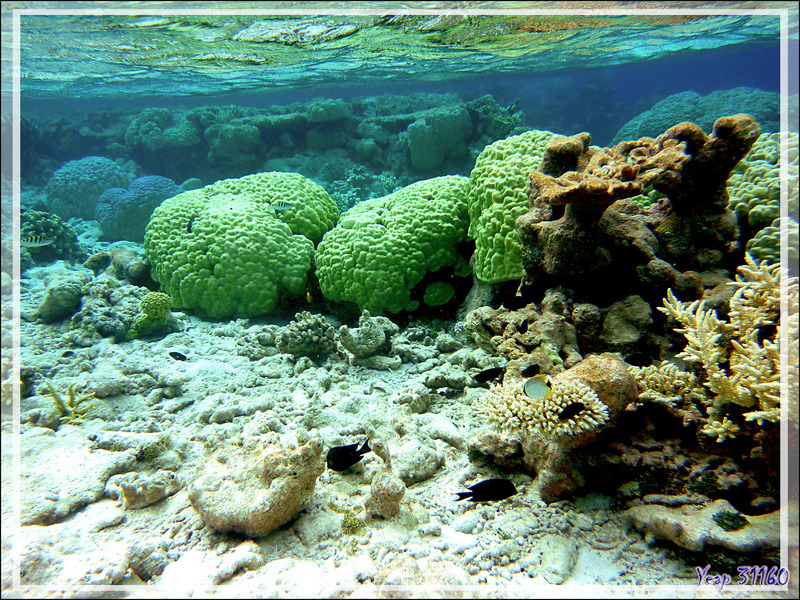Ambiance et couleurs sous-marines - Atoll de Fakarava - Tuamotu - Polynésie française