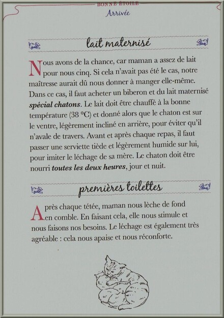 ♥ suite secrets de chats ♥