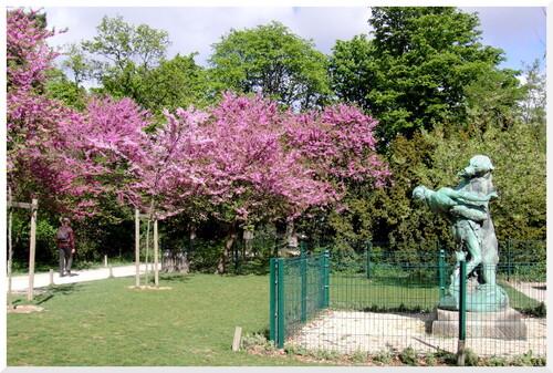 Paris. Les arbres de Judée.