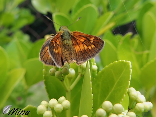 Des Papillons...