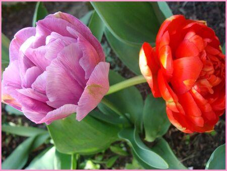 Fleurs_du_Jardin__7_