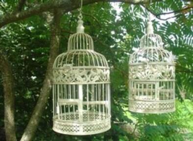 **  Des  Gages & des Oiseaux en Liberté..**