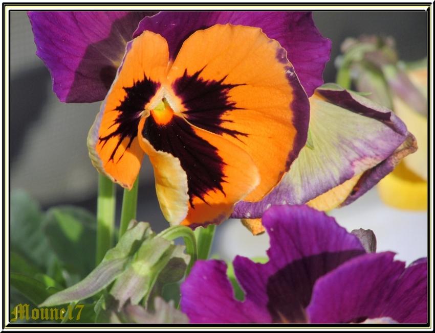 Les dernières fleurs du jardin