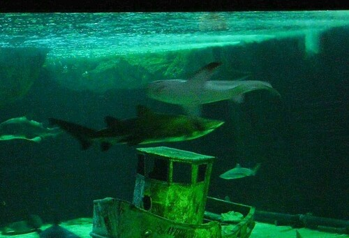 Grand aquarium requins d'Australie