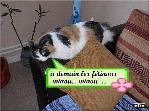 chats-12demain-les-felinous.jpg