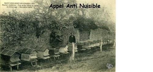 abeille et apiculture d'antan