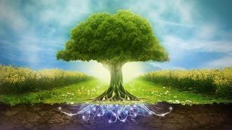 Arbre de vie : origines, significations et symboles • Mon-Talisman.com