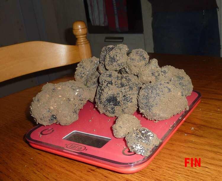 Occupation du moment : les truffes.