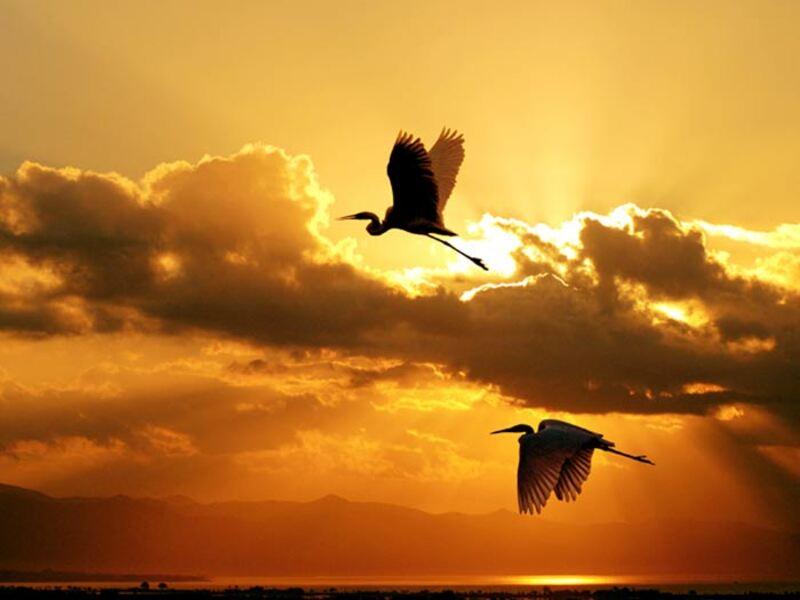 17 images d'Oiseaux #3