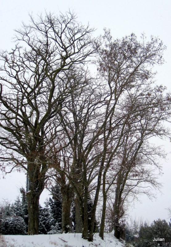 x03 - bouquet d'arbres