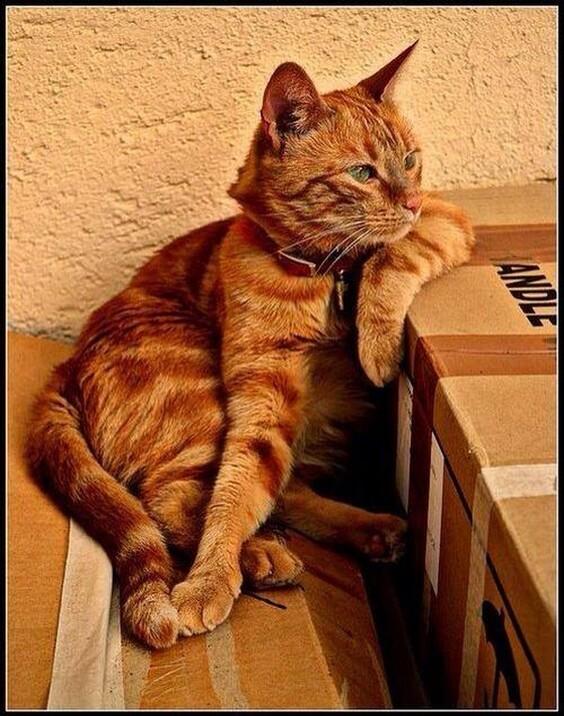 Une histoire de chats ou chatons