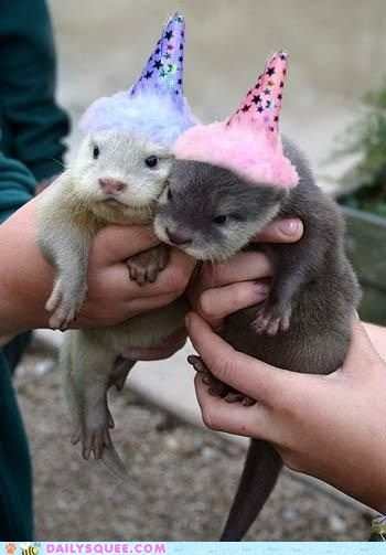 Happy Birthday animals