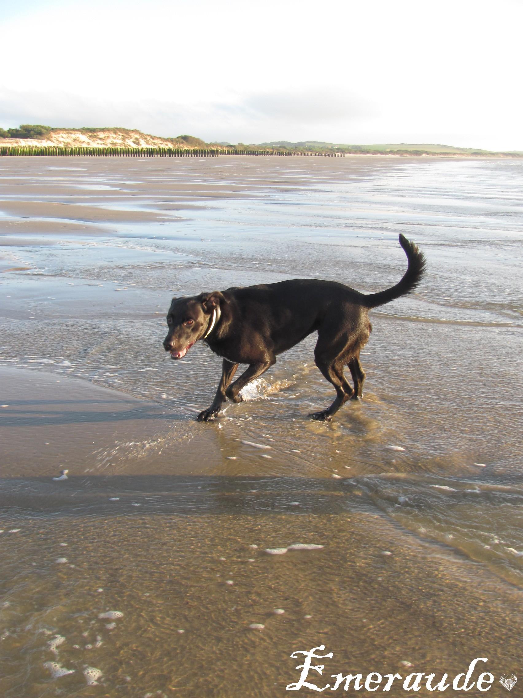 Dixy à la plage