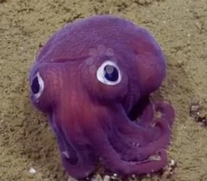 http://lancien.cowblog.fr/images/Animaux6/octopus.jpg