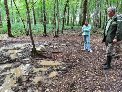 """""""La forêt, berceau de l'Harmonie"""" une découverte de notre belle  forêt Châtillonnaise avec Paul Brossault..."""