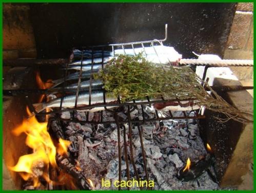sardines--24-.JPG