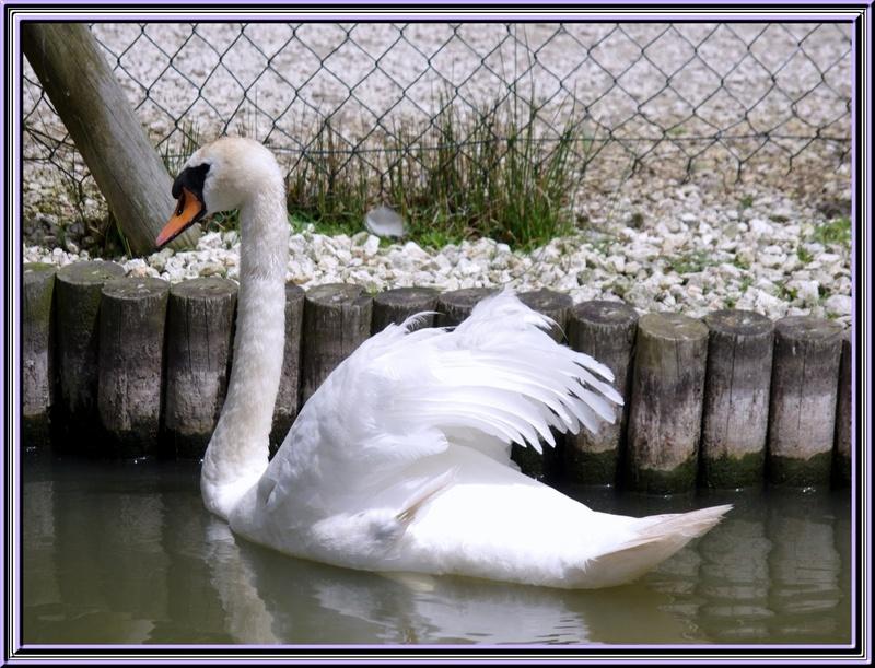 Le marais aux oiseaux à Dolus  (île d'Oléron)