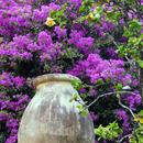 La jarre fleurie de l'Habitation Clément - Photo : Edgar
