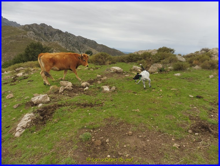 Corse Balagne, le Monte Tolù