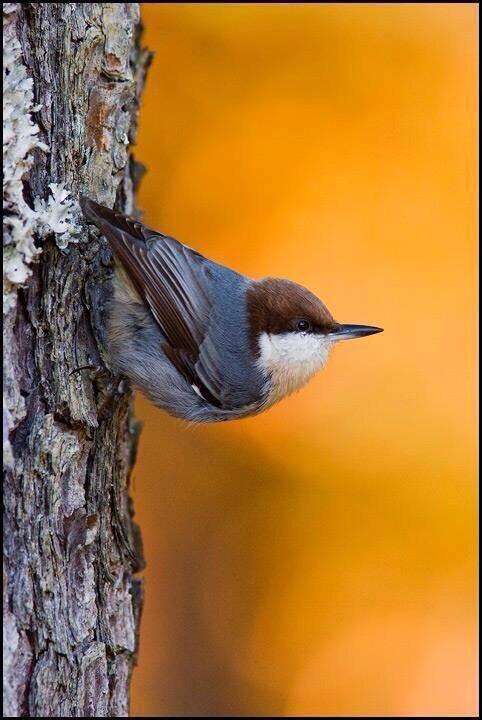 Chants d'oiseaux - partie 2