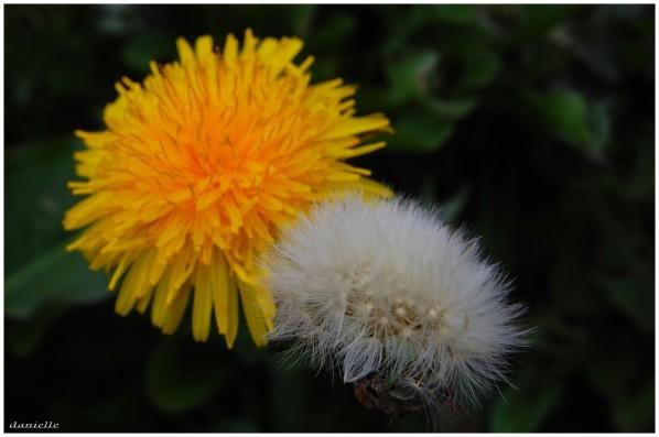 photos-fleurs-0670.JPG