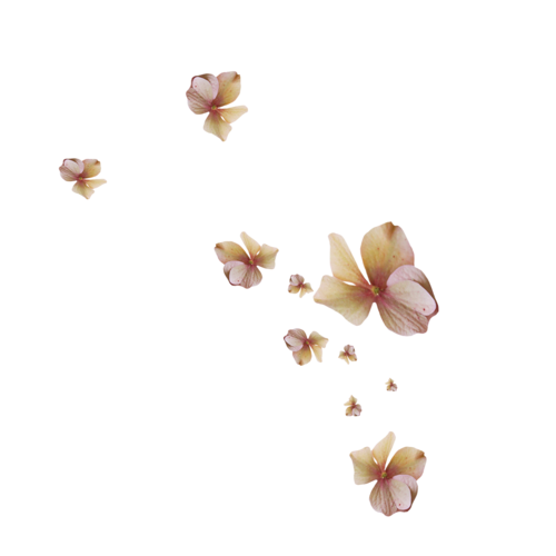 Fleurs en Farandole Série 26