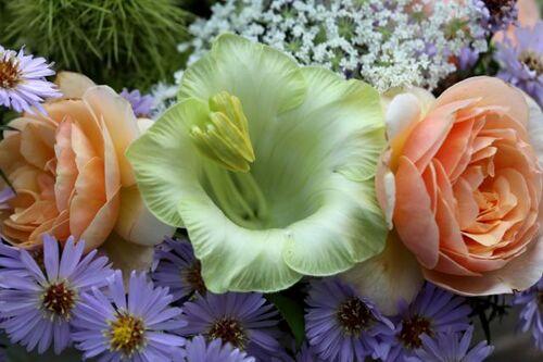 Petit bouquet pour Aywiers