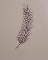 Douceur et plumes