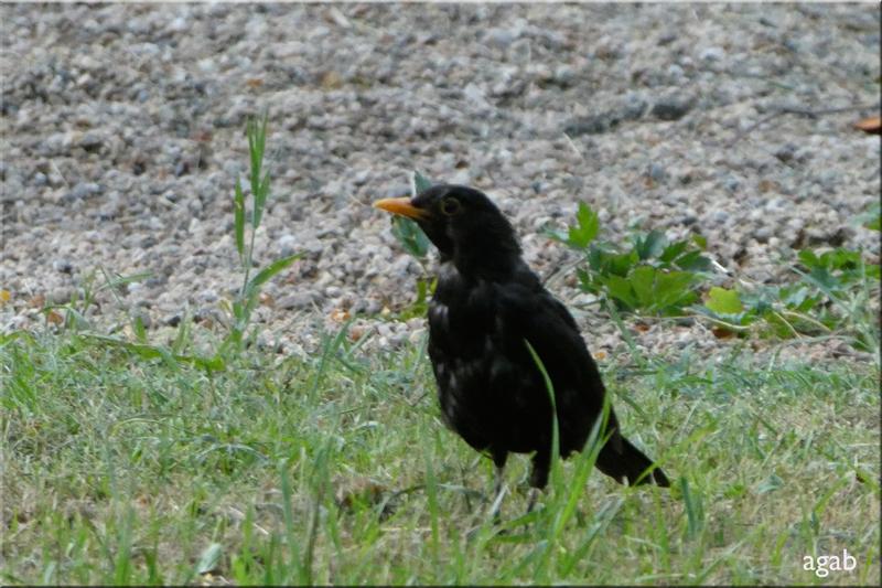 le camping des oiseaux  (juillet 2019)