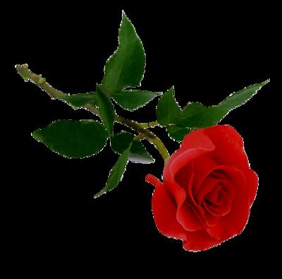 ♥ HORTENSE ET SES ROSES ♥