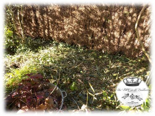 Relooking côté jardin : 1 semainee plus tard