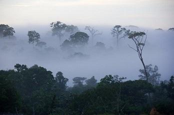 """Les arbres, ces """"êtres"""" mystérieux ..."""