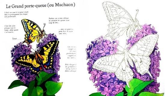 Papillons-a-colorier-3.JPG