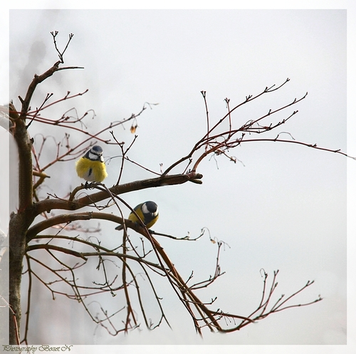 Le coucou du haïku N° 91: l'oiseau et l'automne