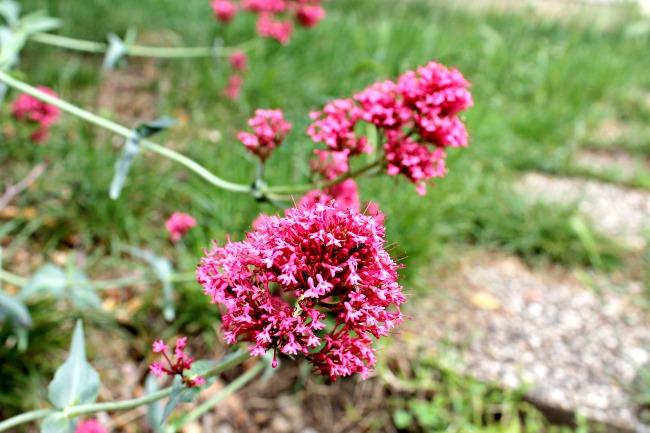 Fleur énigmatique