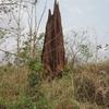 177 Togo Termitière