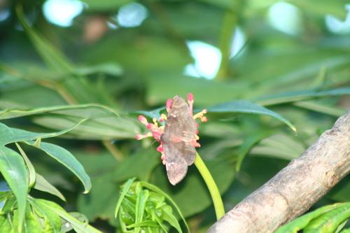 Guadeloupe et papillon