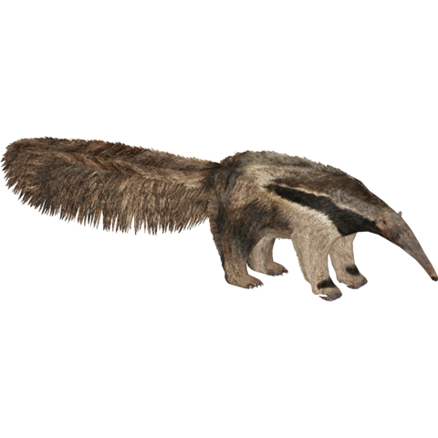 File:Giant Anteater (Tyranachu & Ulquiorra).png