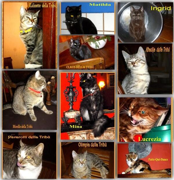 Familles nombreuses de chats
