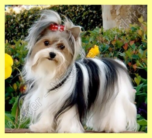Le chien de mes rêves.....