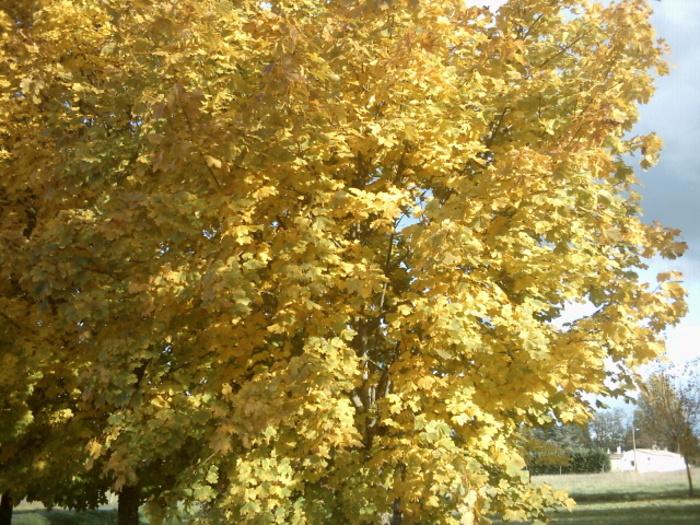 paysage d'automne en gironde