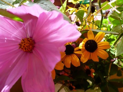 couleurs d'été