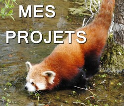 Mes Projets