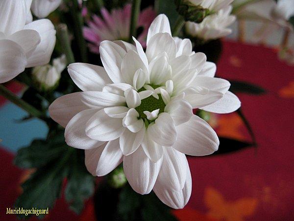 Fleurs-1307.JPG