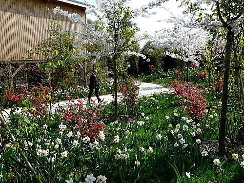 Terra-Botanica--Prairie-fleurie-23-03-069.jpg