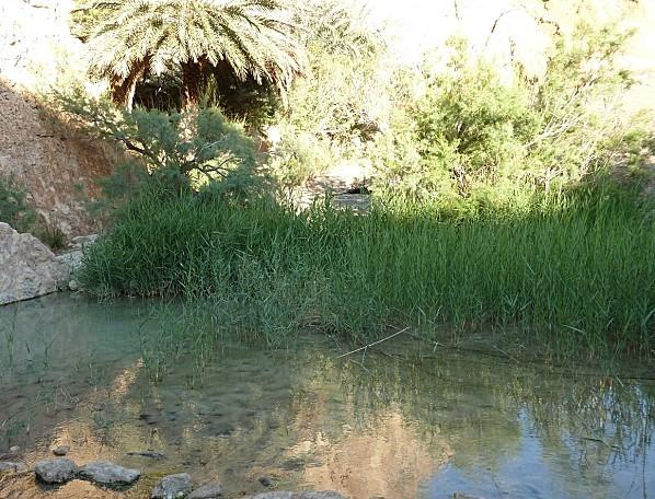 oasis-de-Chebika--6-.JPG