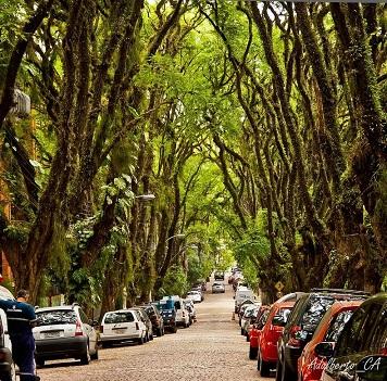 La rue la plus verte du monde ...