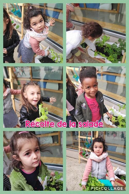 Des nouvelles de notre jardin... en MS.
