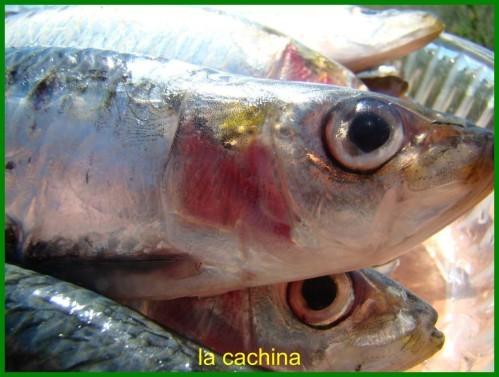 sardines--3-.JPG